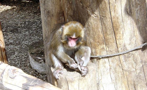 猿の画像 p1_4